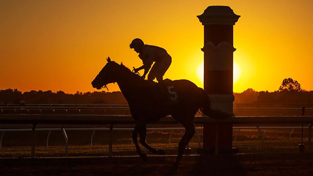 a race horse running at sunset