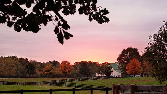 saxony horse farm